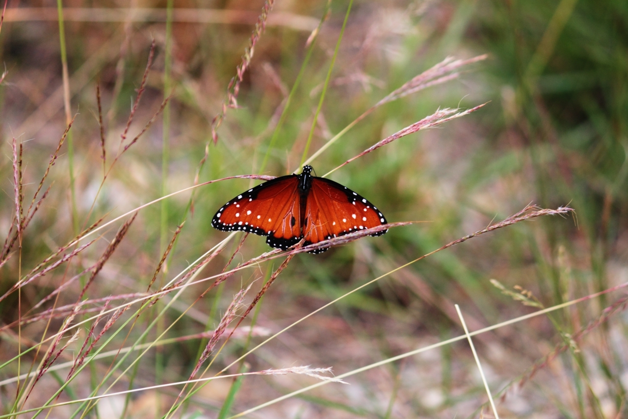 Nature Hike Butterfly