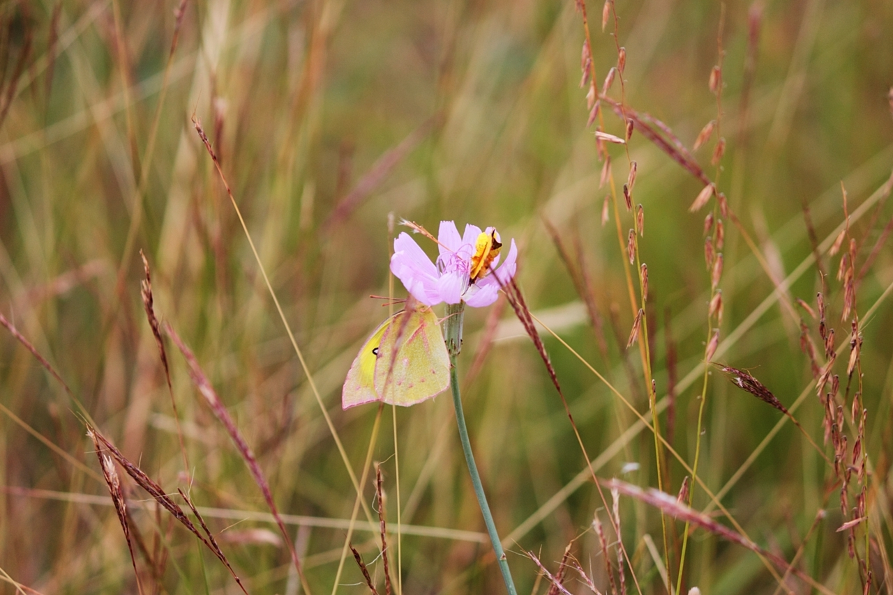 Nature Hike Butterfly and Flower