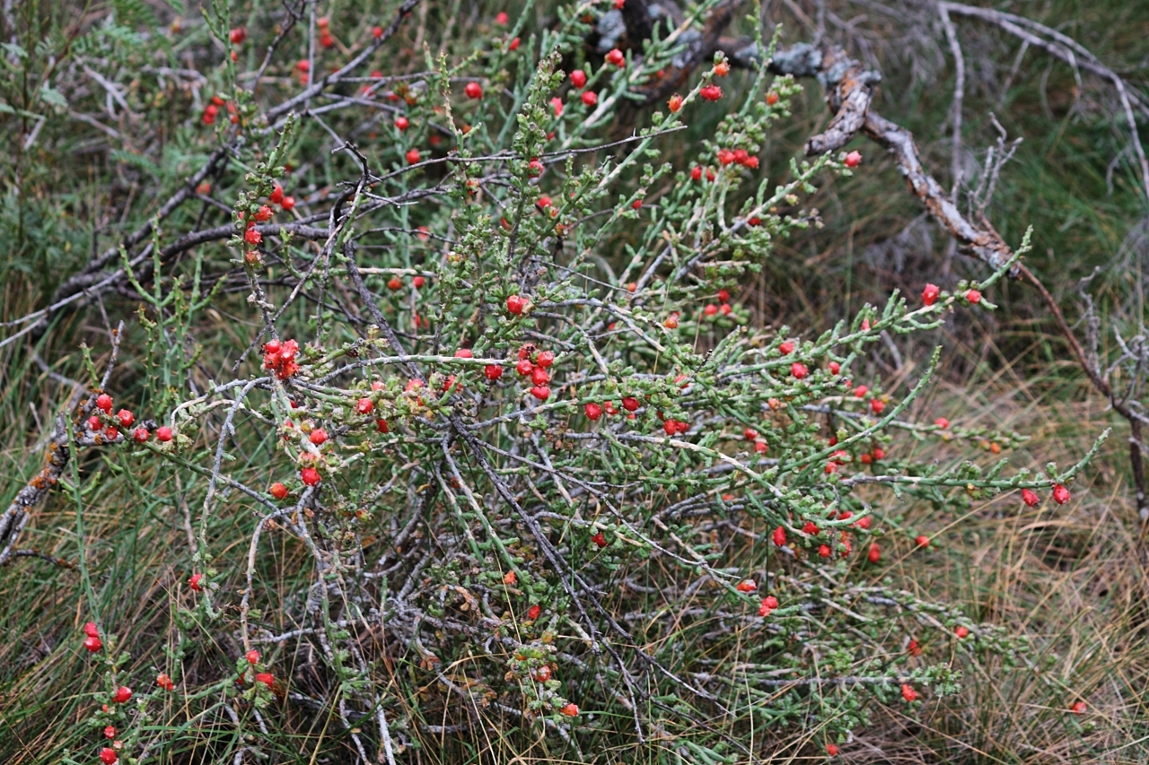 Nature Hike Flowering Cactus
